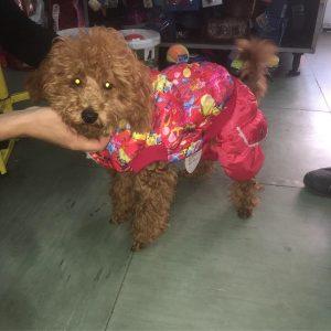 Odeća za pse različitih boja, veličina i dezena. Kao modni dodatak ili zaštita od hladnoće za Vašeg mezimca.