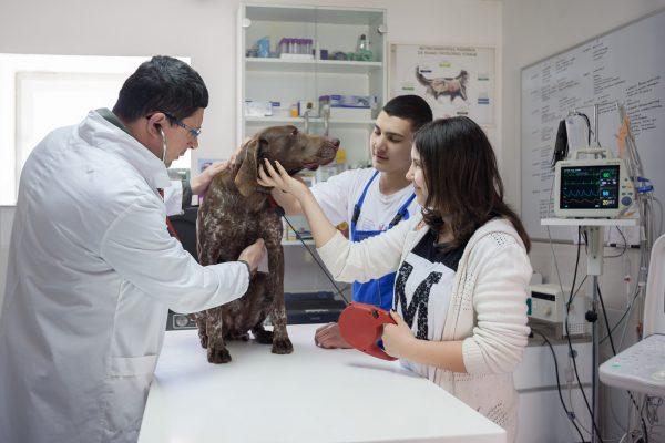 urologija za životinje